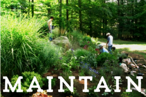 Maintenance – Mowing, Pruning, Cleanups