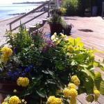 Flower pots by the beach