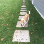 Maggie testing out the new bluestone walkway