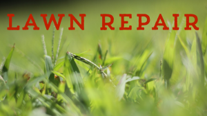Lawn Repair lawn care service for connecticut