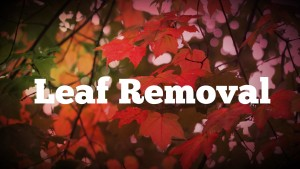 Leaf Removal Connecticut