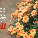 7 Fall Cleanup Steps For a Healthier Lawn and Property this Fall